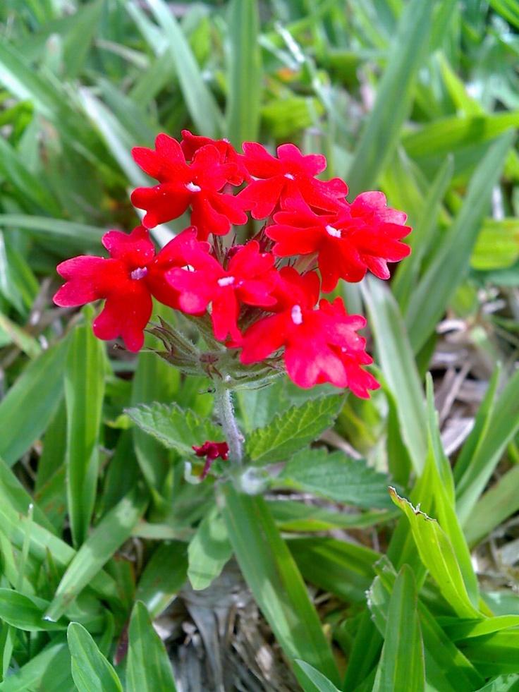 Flores Perdidas!