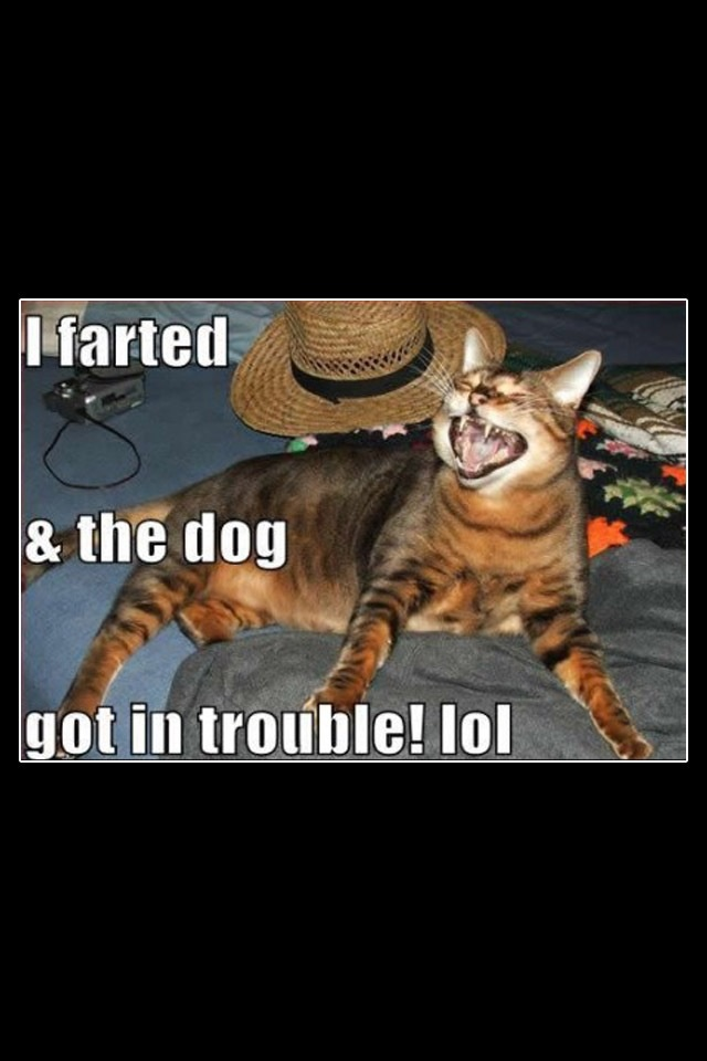 Funny Animal Pictures Of The Day – 19 Pics - Daily Lol pics   Animal Fart Memes