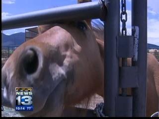 Critics target horse slaughter company