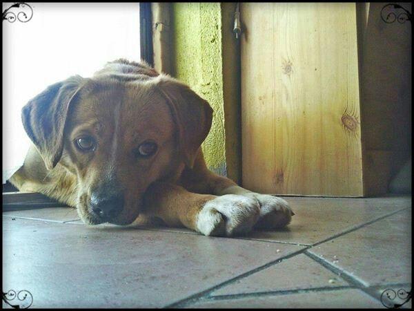 Aww cute dog