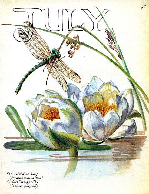 July, Edith Holden botanical prints, Country Diary of An Edwardian Lady,dragonfly