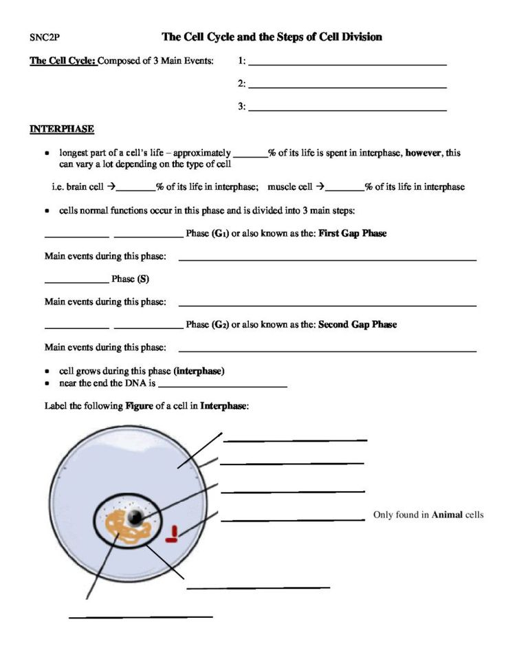 The Cell Cycle and the Steps of Cell Division - Worksheet - October 23, 2017