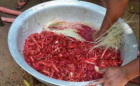 Proceso de teñido de fibra de moriche en comunidad Sikuani.  ( Vichada - Colombia) Conoce más de nuestro trabajo en Mambe.org!