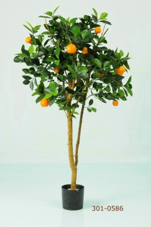 Plant decoration for room with no sunlight decorating - Plants that need no sunlight ...