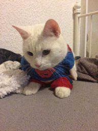 EQLEF® HundeKLEIDUNG Haustier Bekleidung Hundepullover Kleidung Kostüme Superman Anzug Hundejacke (Medium (Hals: 25-30 cm)): http://amzn.to/2r2idC7