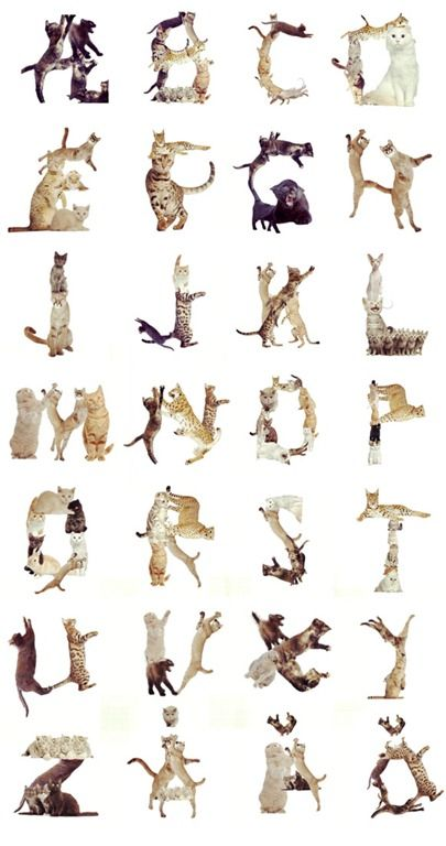 Cat alphabets / Alphabets created using the 'Cat Effects' app, by Martin Löfqvist, an illustrator based in Sweden.