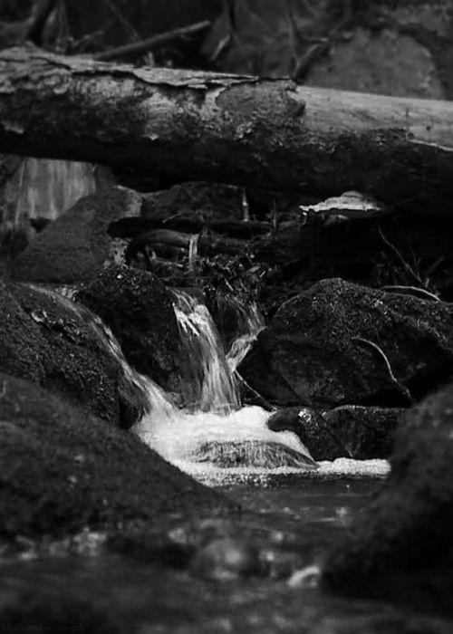 Black and White GIFs - Adirondack Mountains, New York (Paul Frederick)