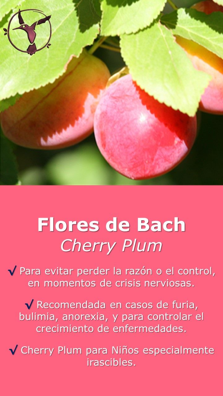 #floresdebach #beneficios #español #niños #paraniños #remedies #salud #terapia #terapiasalternativas #remedios #cherryplum