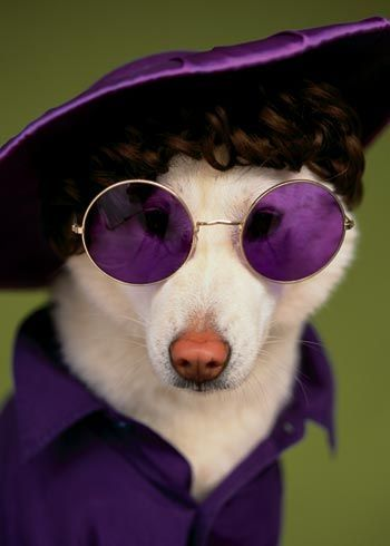 Picture-19 ( 30 Most Funniest and Beautiful Dogs and Cats with Spectacle )