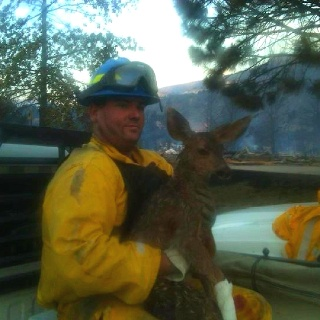 Firefighter rescuing a fawn from the Waldo Canyon fire in Colorado, beautiful picture.