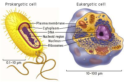 Common features of prokaryotic and eukaryotic cells