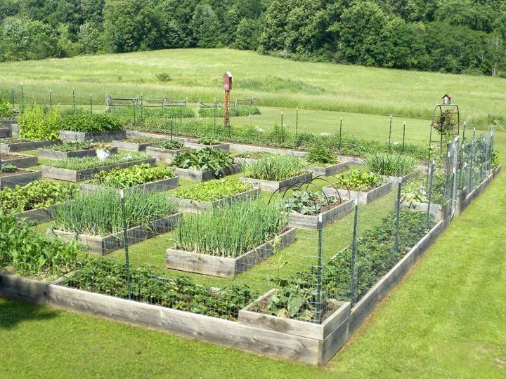 Raised Beds Garden Layout Wow That Is A Big Garden But Looks To A