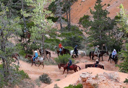 Bryce Canyon | Bryce Canyon National Park: le Escursioni Più Facili e le Gite a Cavallo - Horse Trail Bryce Canyon NP,Utah