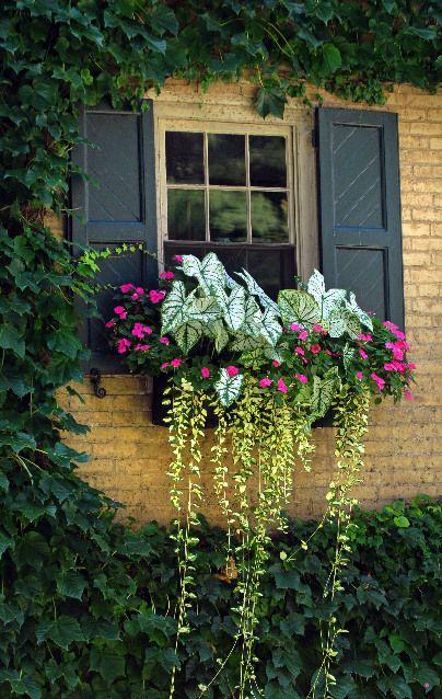 White Caladium, variegated vinca, and pink impatiens fill this window box
