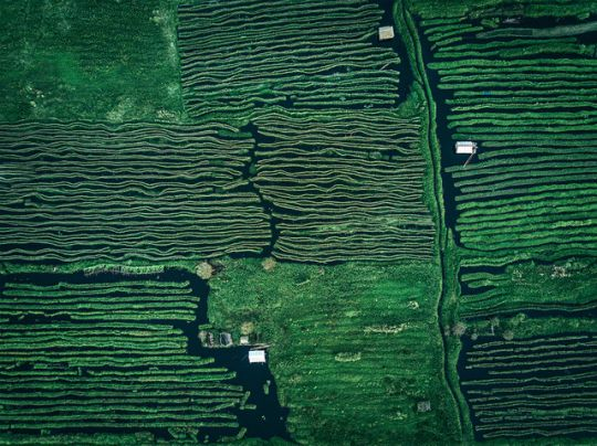 #dimitar_karanikolov #photographie #photographe #bâteau #londres #asie #asian #asia #nature #river #rivière #village #photographer #photography #boat #inle_lake_myanmar #london #cg #artist #architect #noipic
