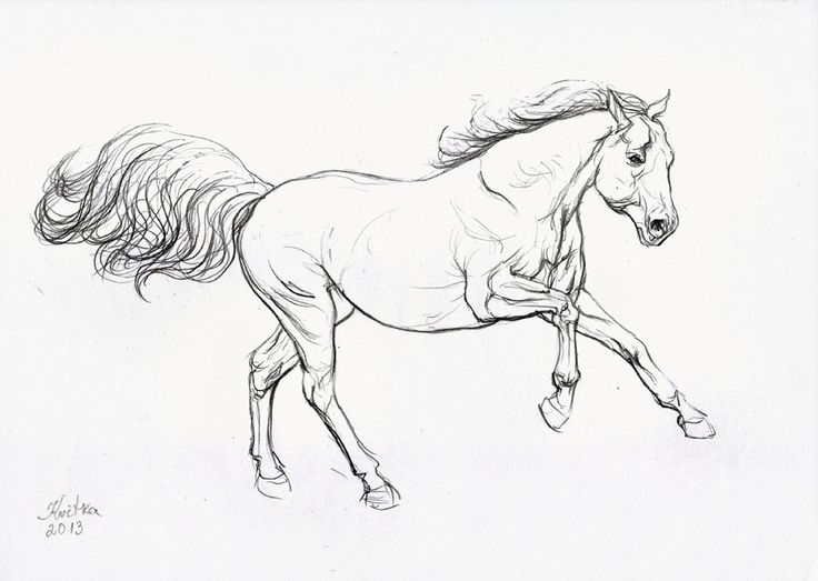 The 25 best Easy horse drawing ideas on Pinterest How to draw