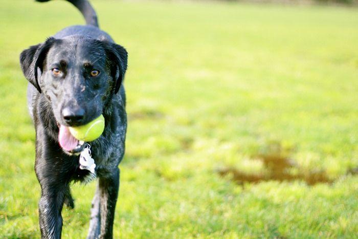 6 Dicas para desfrutar de parques em companhia d o Cachorro