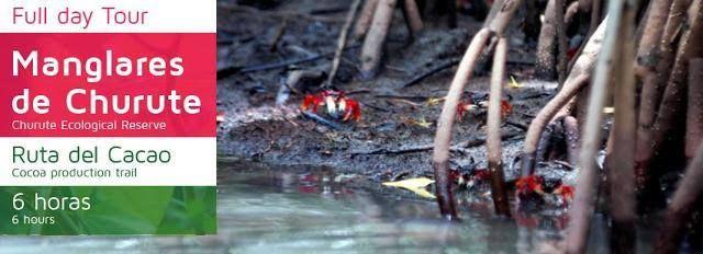 ECUADOR ADVENTURES! Manglares de Churute - Ruta del Cacao    Navegue por el estero Ulpiano mientas conoce los manglares en la reserva ecológica de Churute. Aquí los guías de la reserva natural nos explicaran su importancia en el balance del ecosistema. Este lugar se caracteriza por la gran diversidad de aves tropicales y su densa vegetación. Podremos observar a los monos aulladores. Conoce también cómo se cultiva el cacao y prueba nuestro chocolate artesanal reconocido y premiado a nivel…
