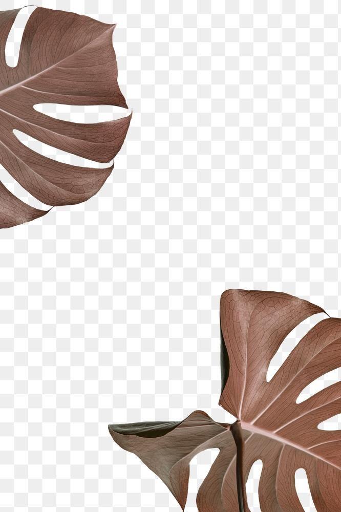 Copper Monstera Leaves Design Element Free Image By Rawpixel Com Adj Design Element Background Design Free Illustrations