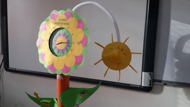 My Project is about Photosynthesis and Time
