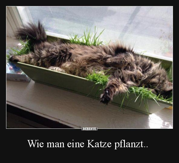 Besten Bilder, Videos und Sprüche und es kommen täglich neue lustige Facebook Bilder auf DEBESTE.DE. Hier werden täglich Witze und Sprüche gepostet! – Alexander Gilan-Schah