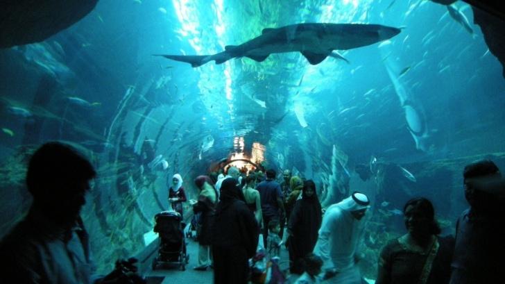 TOPUL celor mai FRUMOASE grădini zoologice din lume http://www.realitatea.net/topul-celor-mai-frumoase-gradini-zoologice-din-lume_950992.html#ixzz1xgTGjF00