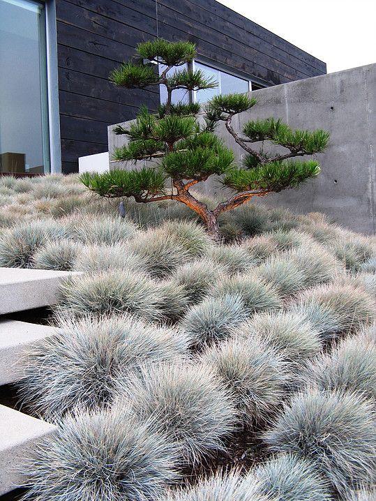 #design #garden #庭 #scalpted stone pine (Via:designgrounded.com)…