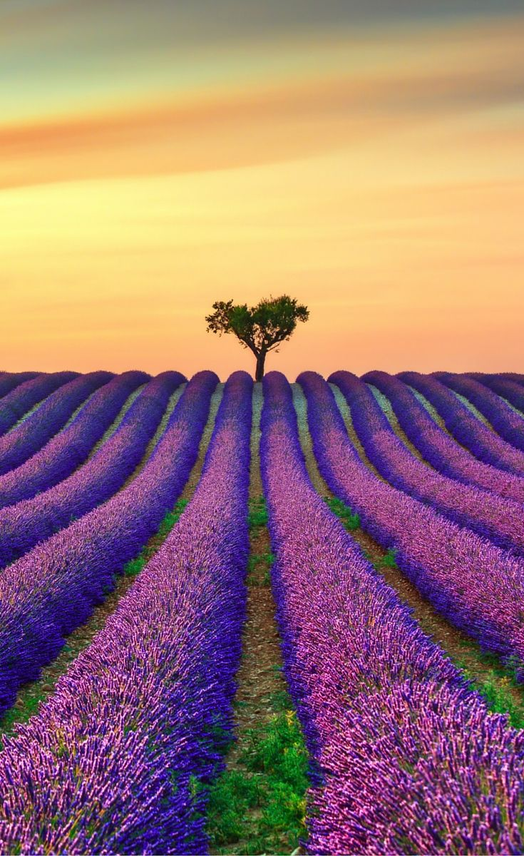Lavender Fields in Provence, France!  Click to see 25 more incredible fairy tale travel destinations!