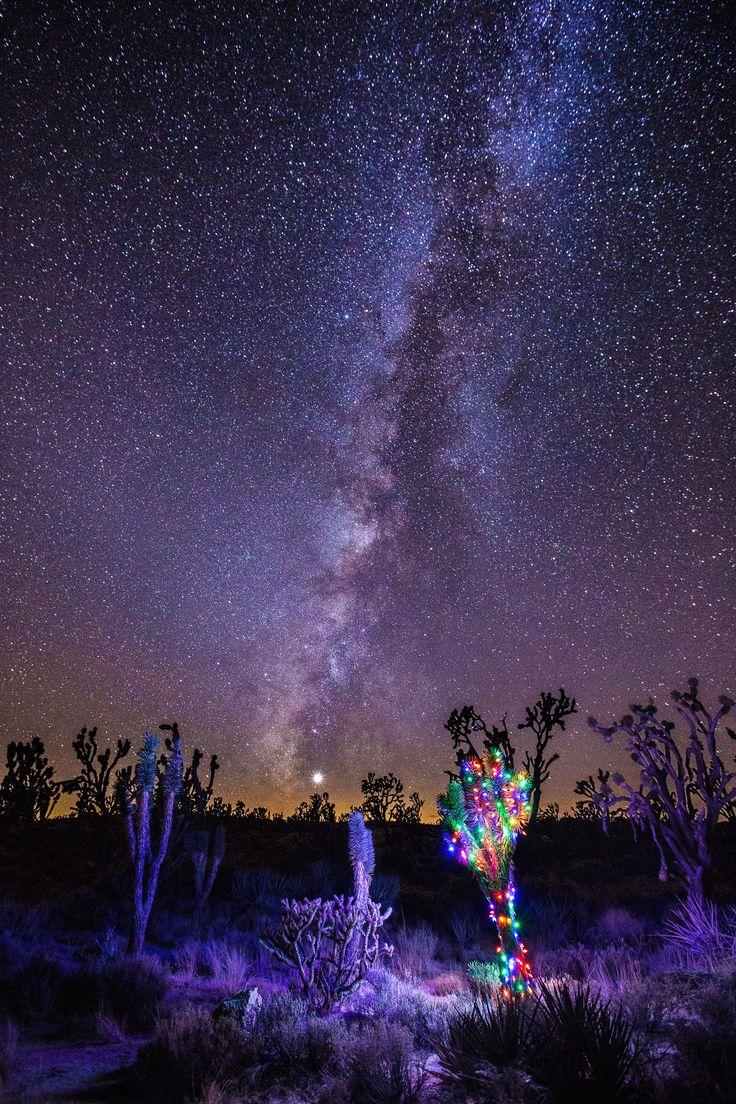 xmas lights on joshua tree