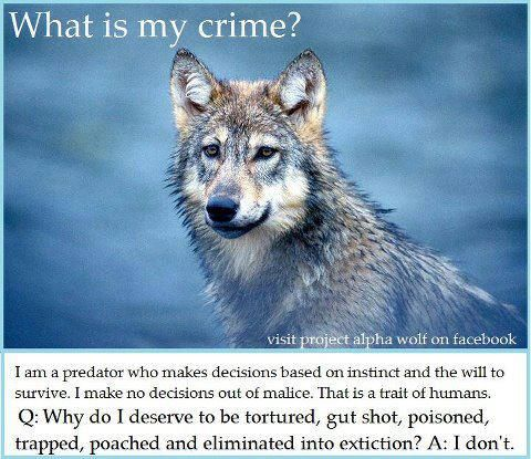 sunglasses reviews 2015 SPEAK OUT  HELP STOP MONTANA  39 S BARBARIC WOLF KILLING BILL SB 397  ON 4 9 13 the bill passed through the Montana Senate  it  39 s now up to the committee  Please be a voice for these poor creatures  they need our help now more then ever  These BRUTAL ASSAULTS on our country  39 s wildlife must be stopped  PLZ Sign  amp  Share