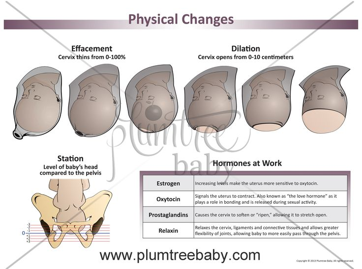 Physical Changes Posters The O Jays It Is And Babies Cervical Effacement Dilation Chart