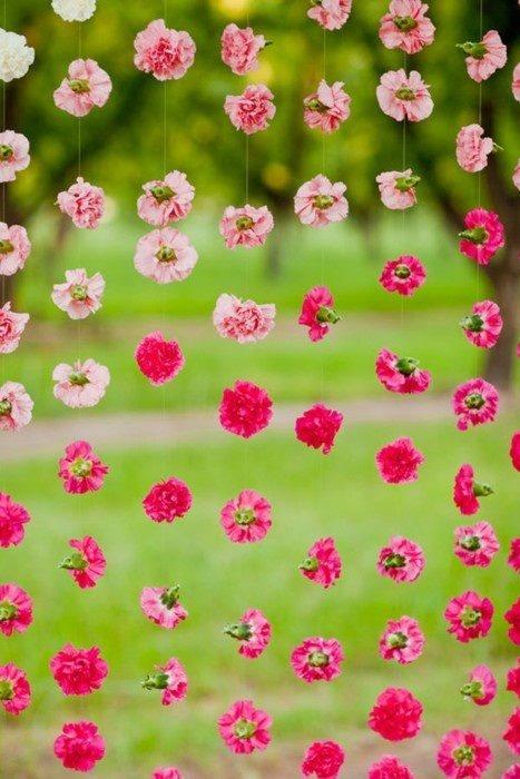 tienes un evento en tu jardín y no sabes como decorarlo?? que tal esta idea de hacer una cortina de claveles?? solo necesitas hilo transparente y varias tonalidades de estas flores :)