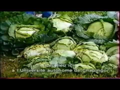 Don José Carmen Garcia Martinez - L'homme qui parle avec les plantes. Pour supporter financièrement le réalisateur video, &, en apprendre plus encore sur cet...