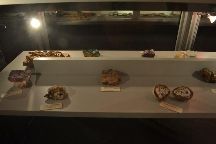 Bio Sciences museum collections