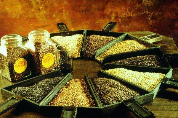 Солод – специально подготовленное зерно.  Без пивного солода приготовить хорошее пиво невозможно.  http://privatnamarka.com/category/domashnee-pivovarenie/solod/  Способов обработки зерна – множество. От способа обработки солода зависит то, какое пиво Вы получите: светлое, темное, пшеничное, эль.  http://privatnamarka.com/solod-wheat-pshenichnyj/  Качественный солод для пива, как мука для хлеба.