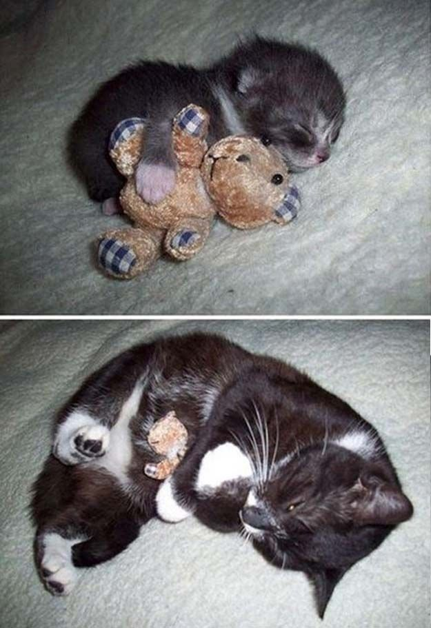 The cat who got older but didn't grow up. | The 50 Cutest Things That Ever Happened