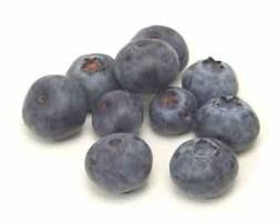 planting and caring for blueberry bushes