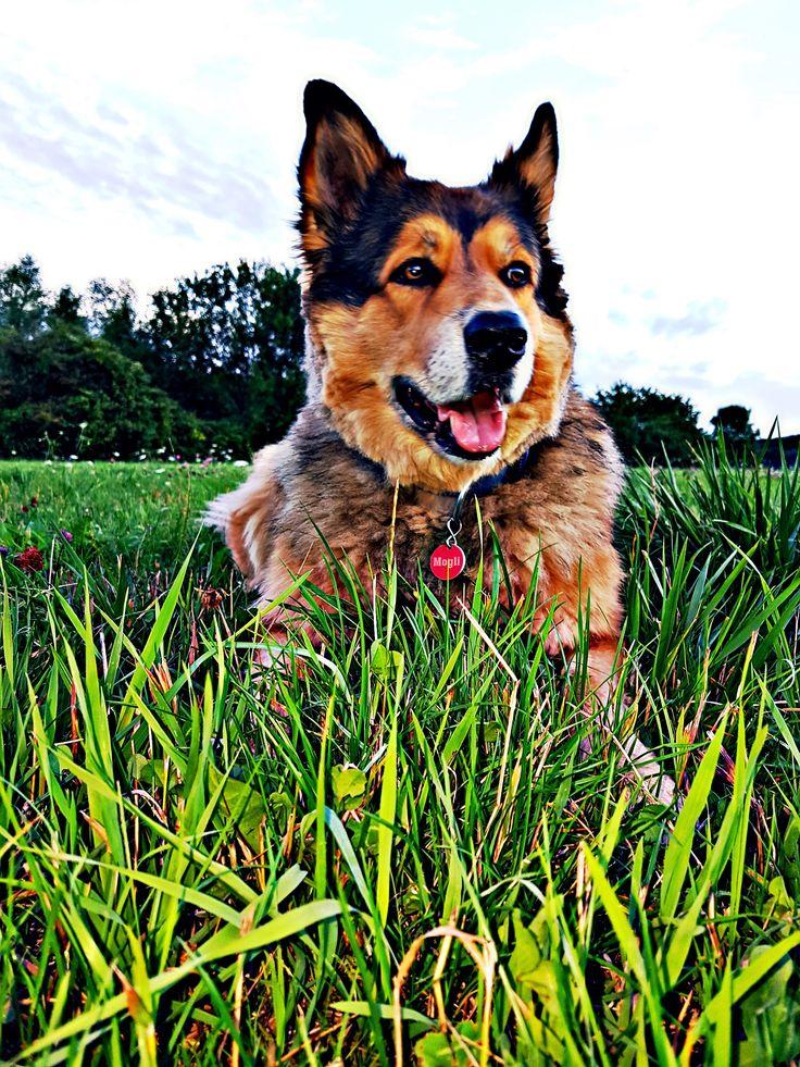 Hunde Foto: Micha und Mogli ( Colli-Neufundländer Mix ) - Tag des Mischlinghundes Hier Dein Bild hochladen: http://ichliebehunde.com/hund-des-tages  #hund #hunde #hundebild #hundebilder #dog #dogs #dogfun  #dogpic #dogpictures