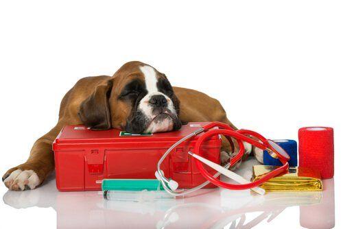 La cassetta di pronto soccorso per gli animali | Animali ...