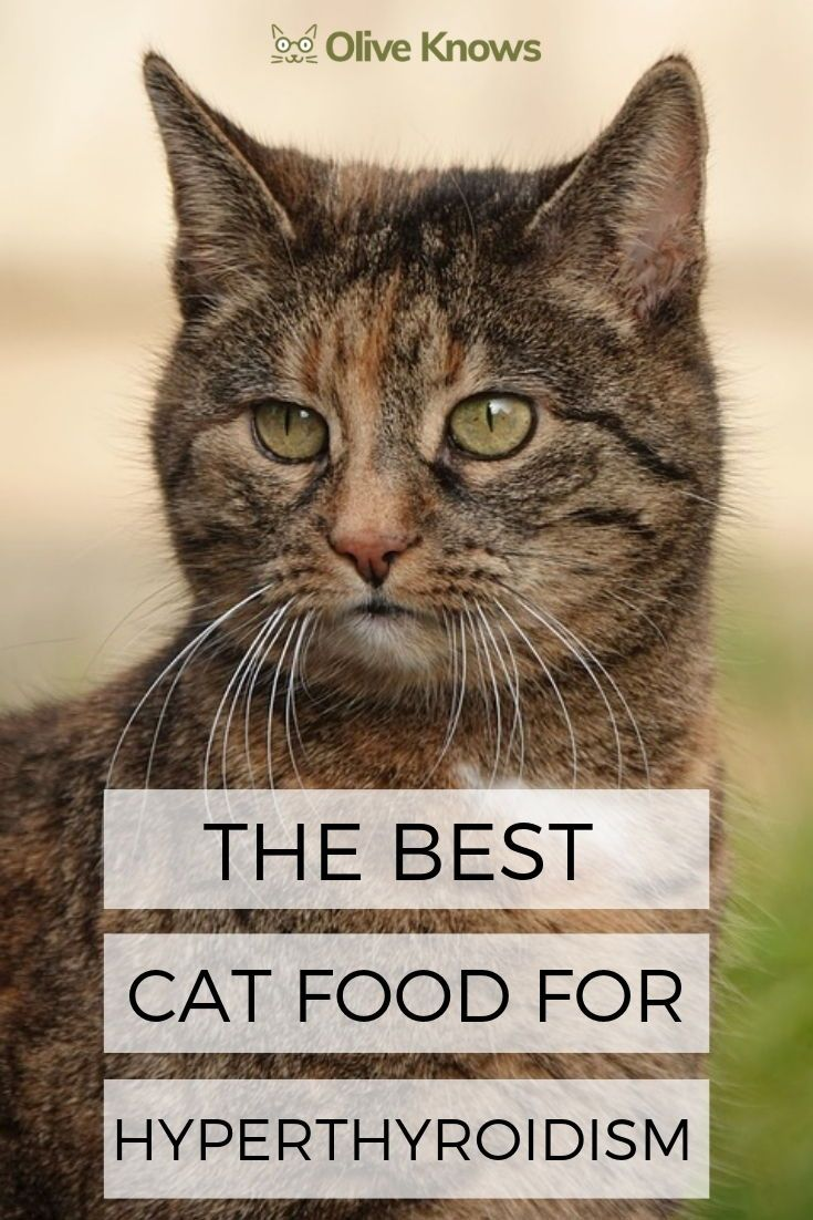 Hyperthyroidism Is The Most Common Glandular Condition In Cats So Here Are Some Ways You Could Help Minimize The Risk Of A Healthy Cat Sick Cat Cats Cat Care