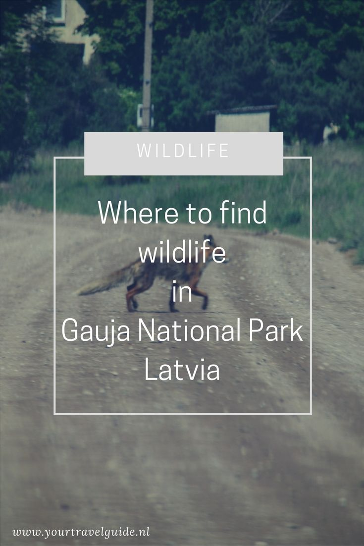 Wildlife In Gauja National Park Letland National Parks Traveling By Yourself Park
