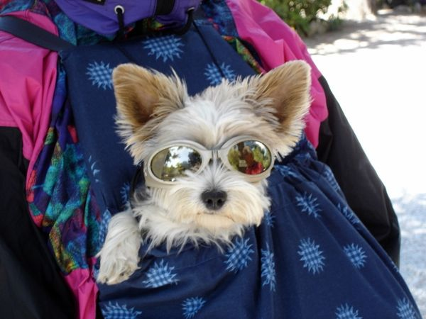 Dog with a pair of protective goggles. Read more about 30 unusual #business ideas: http://impressivemagazine.com/2013/08/28/30-unusual-business-ideas/