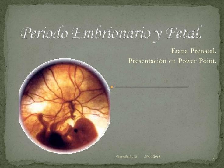 periodo-embrionario-y-fetal by Joanna Moreno via Slideshare