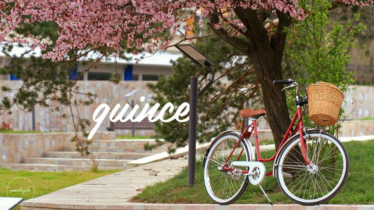 Quince by vocalcycle http://www.vocalcycle.com