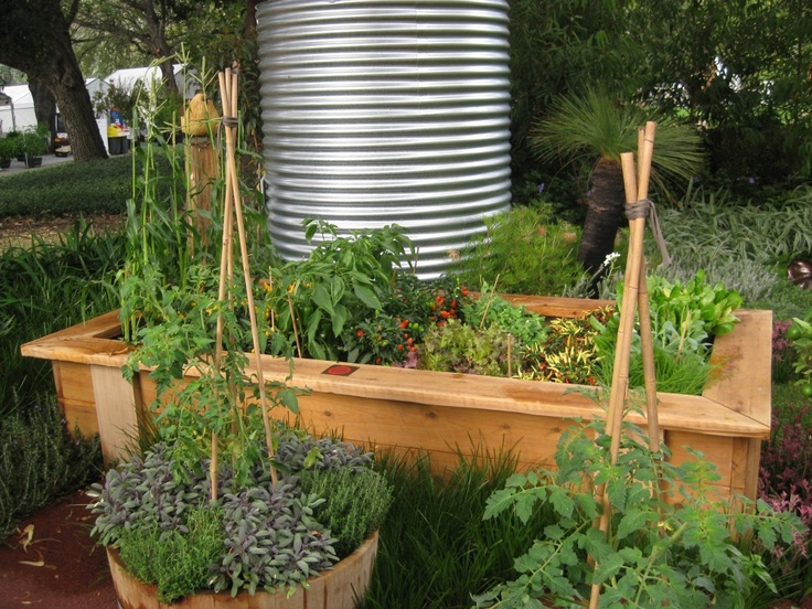 Vege patch. Using raised garden bed and wooden barrels