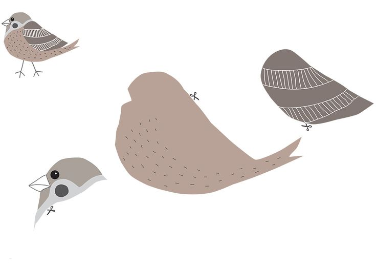Meet birds by pipasik.cz,  free printables activity for kids