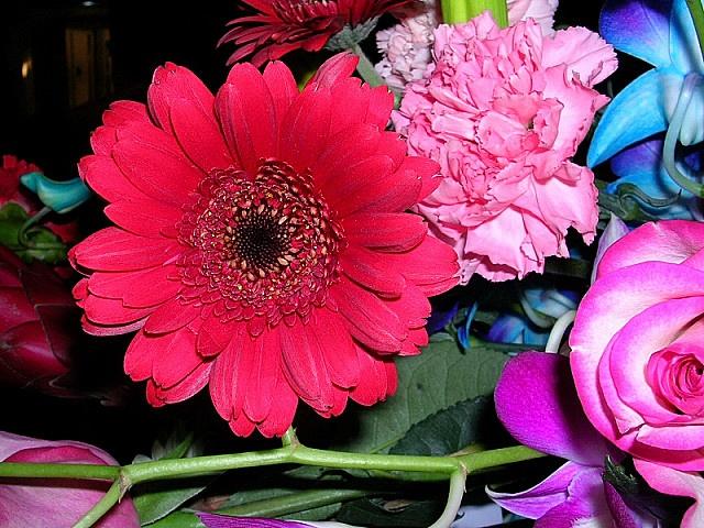 flowersformom by lynn_in_ontario, via Flickr