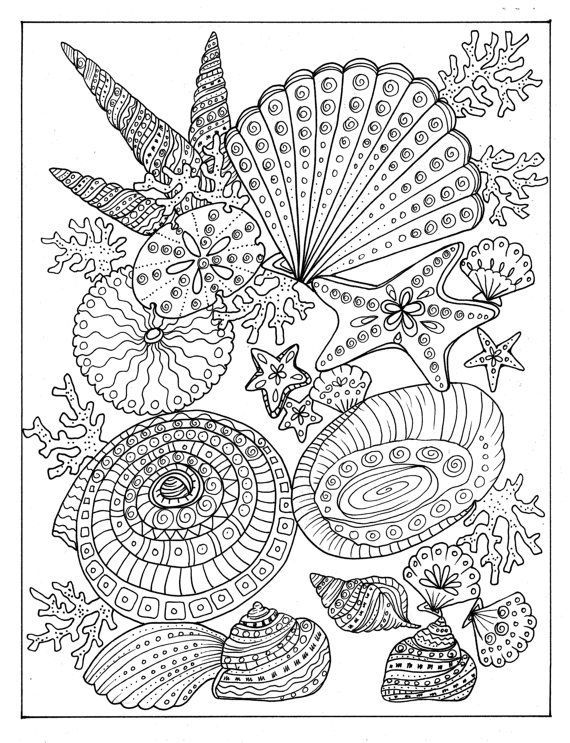 SHELLS Coloring Book Relax Color Adult By ChubbyMermaid