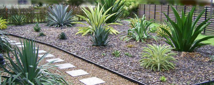 Yucca Agave Plants Landscaping Garden Design Ideas