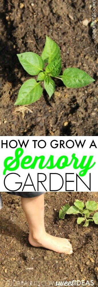 How to grow a sensory garden